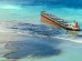 Wakashio Oil Spill - An Ecological Disaster Mauritius will never forget